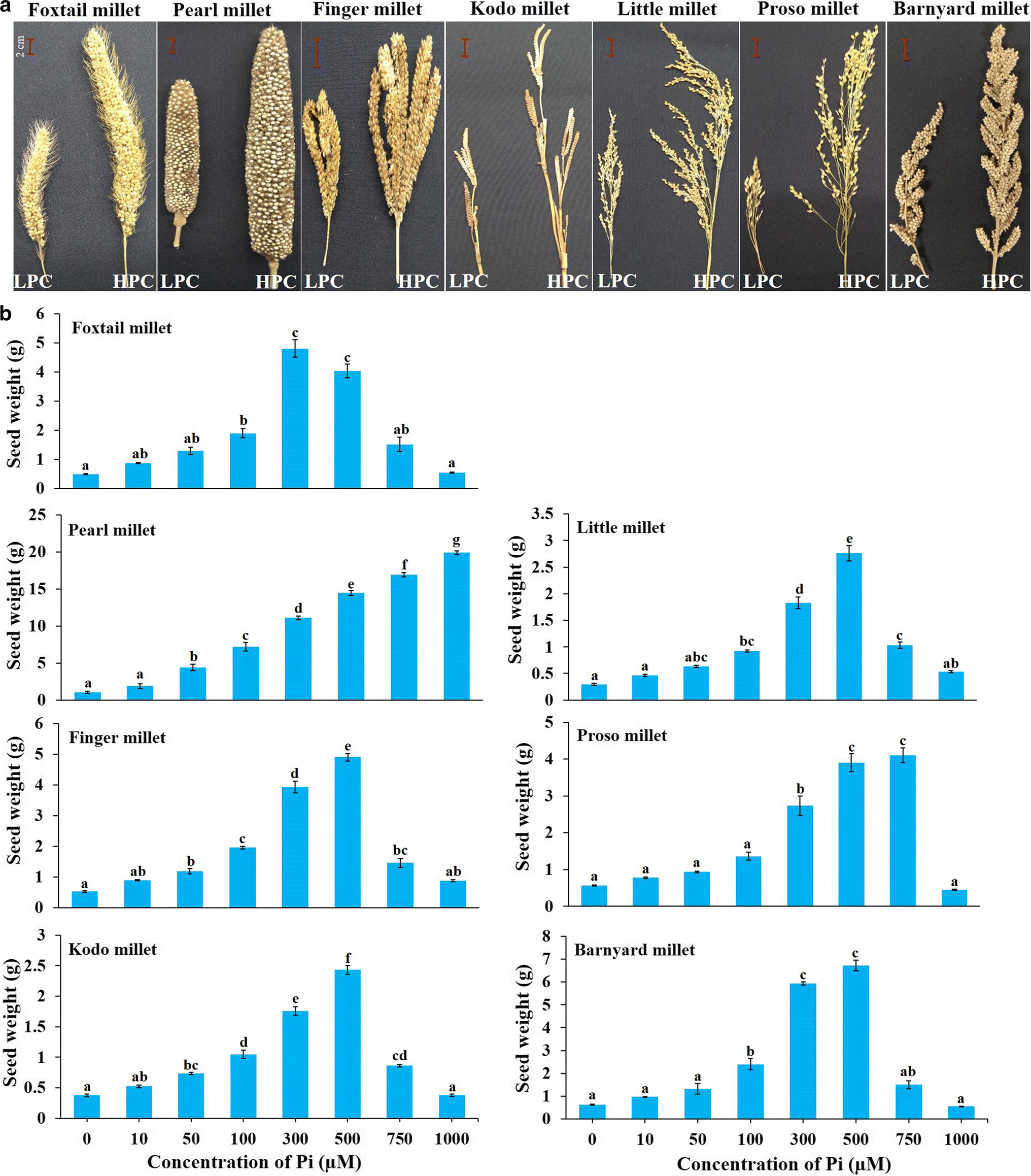Phosphate supply influenced the growth, yield and expression