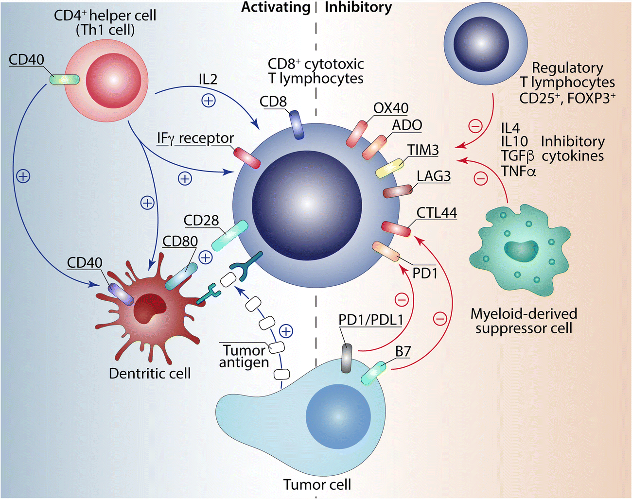 Rational combination of cancer immunotherapy in melanoma | SpringerLink