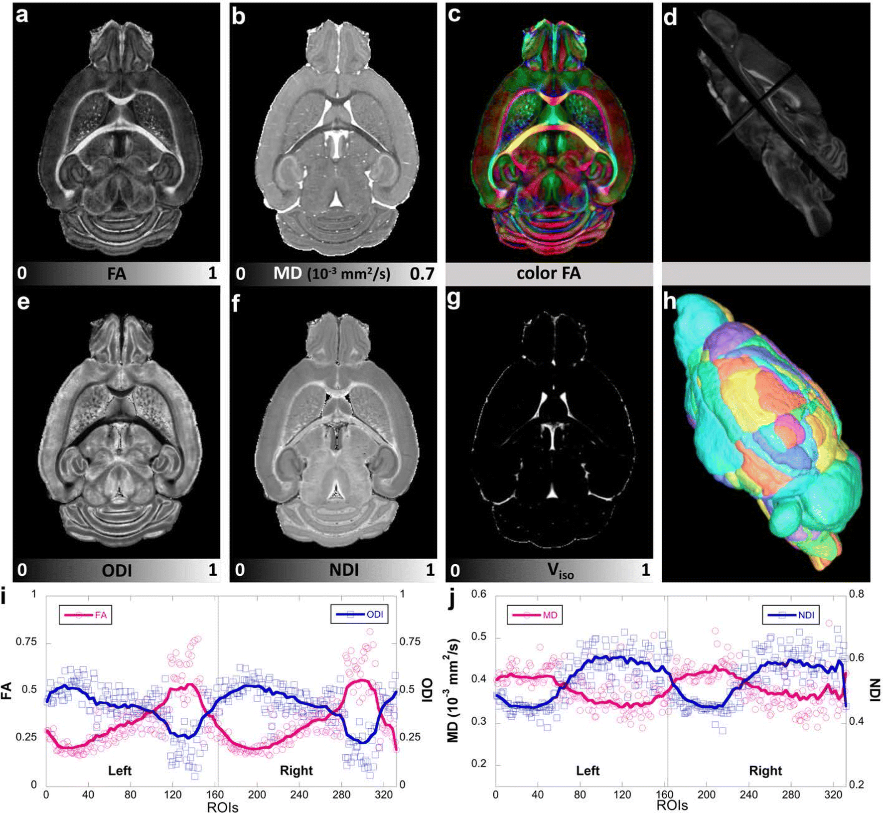 Neurite orientation dispersion and density imaging of mouse