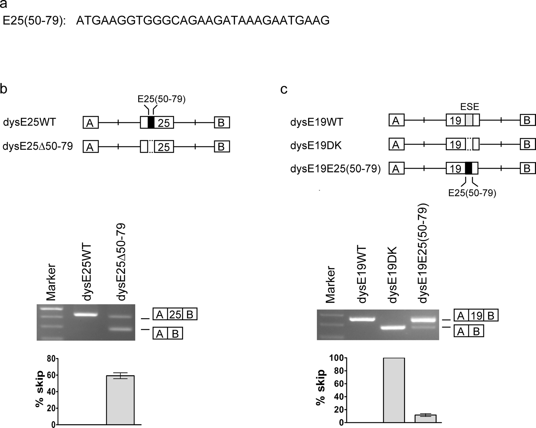 Skipping of an exon with a nonsense mutation in the DMD gene