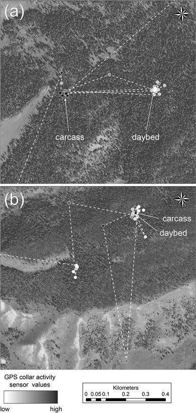 Detecting grizzly bear use of ungulate carcasses using global