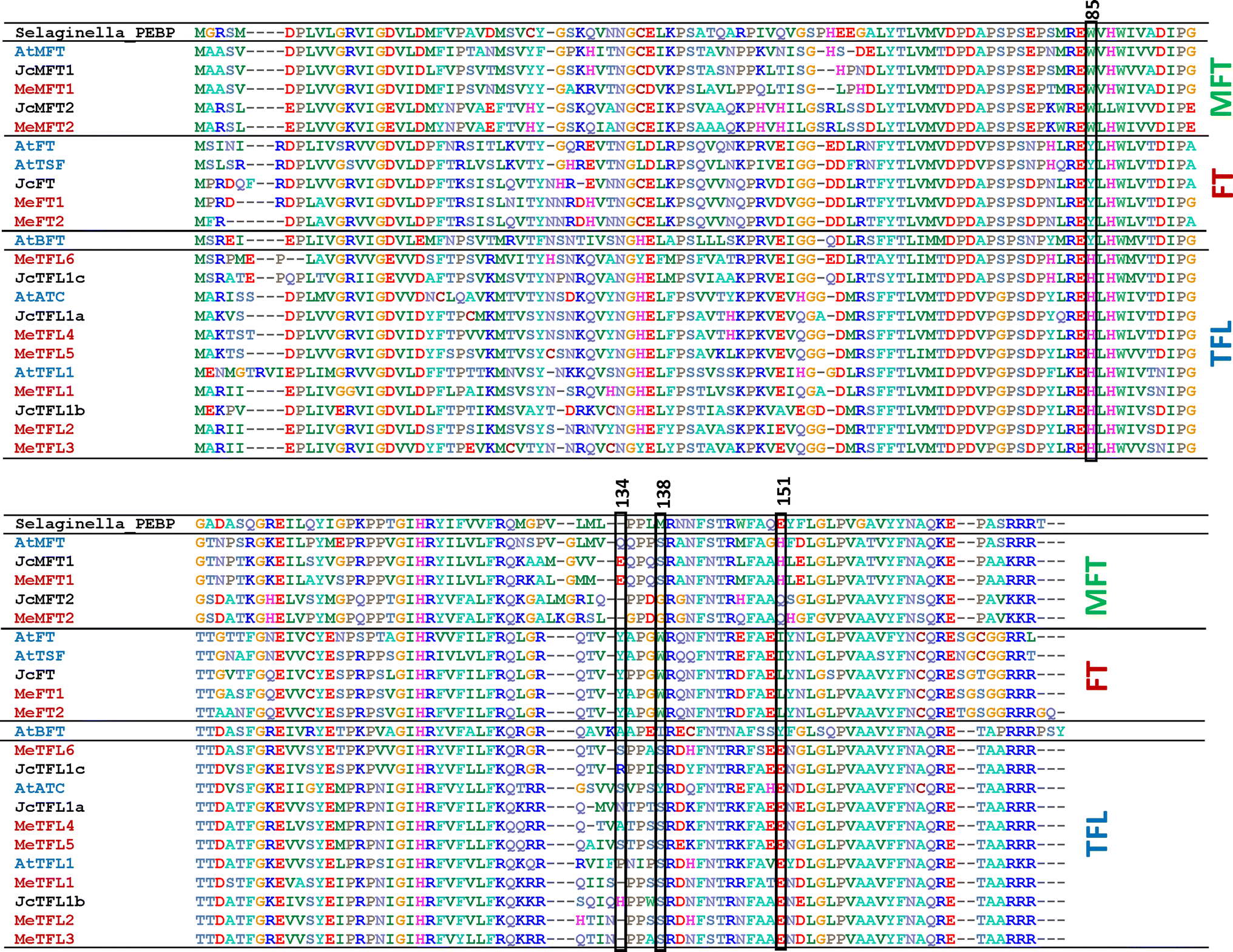 Identification of FT family genes that respond to