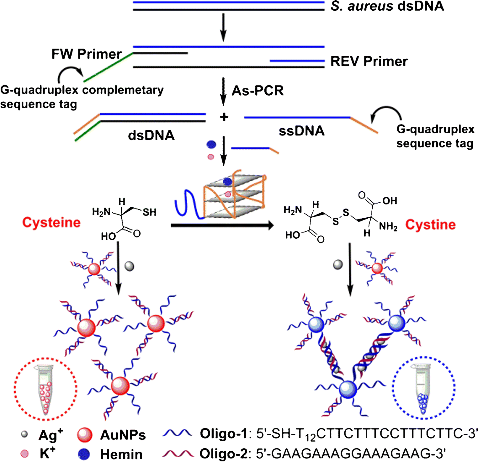 Determination of bacterial DNA based on catalytic oxidation of