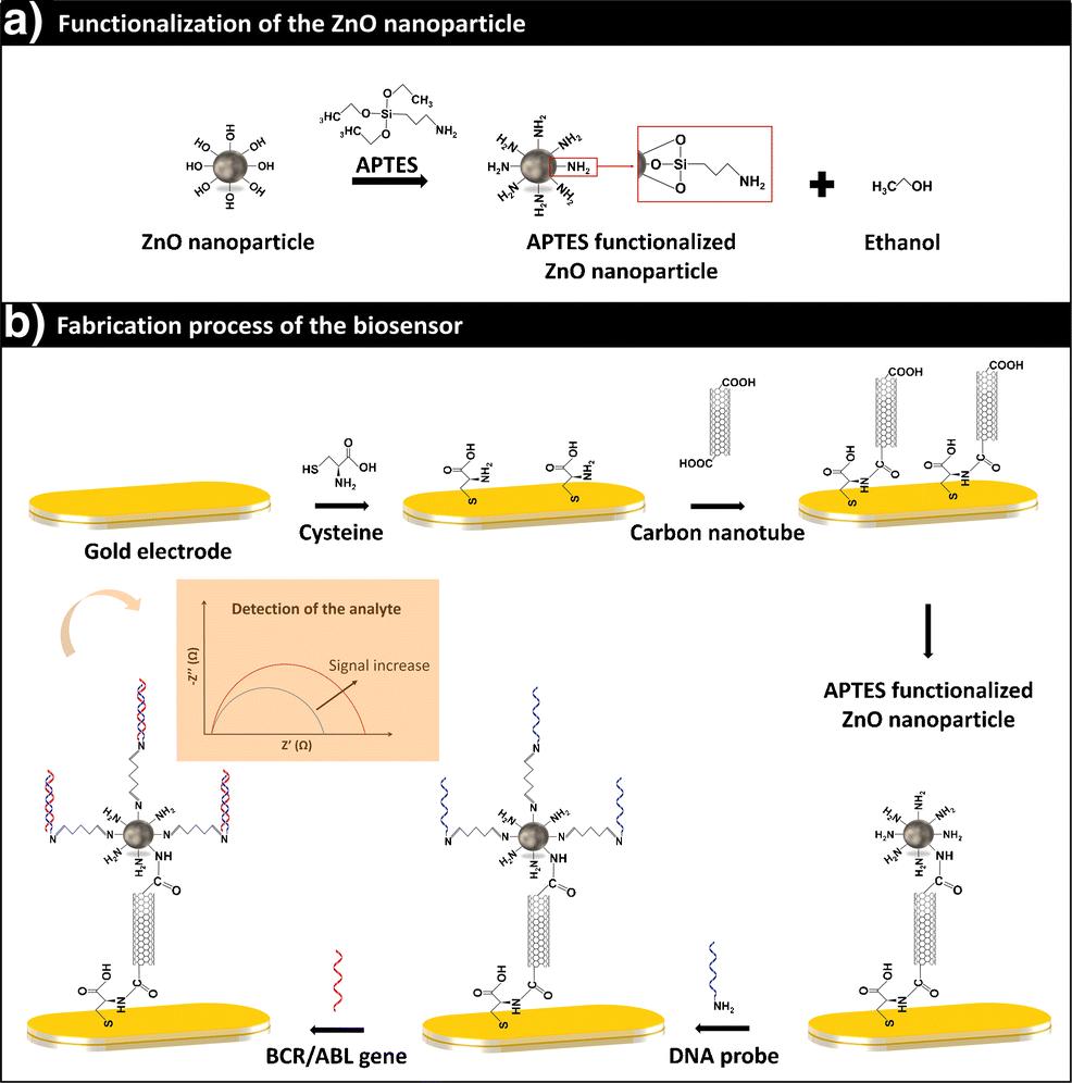 Impedimetric gene ay for BCR/ABL transcripts in plasmids ... on