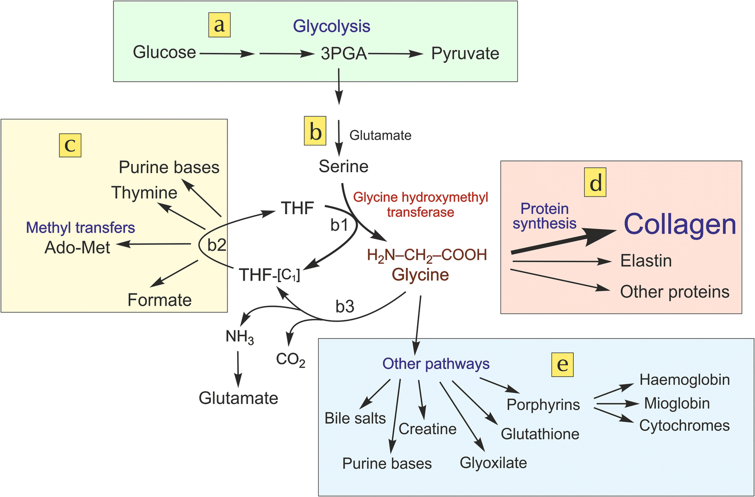 High glycine concentration increases collagen synthesis by articular