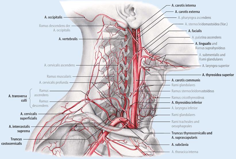 Risiken und Komplikationen gefäßchirurgischer Zugangswege | SpringerLink
