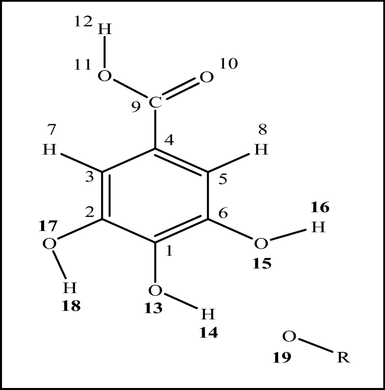 How Does The Presence Of An Oxyradical Influence The Behavior Of