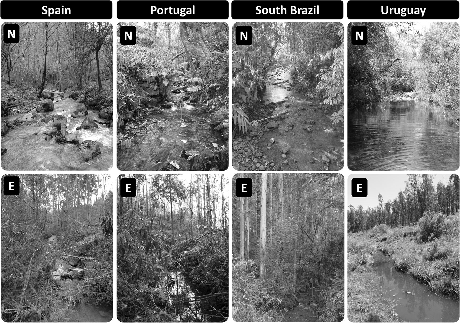 A Global Assessment of the Effects of Eucalyptus Plantations
