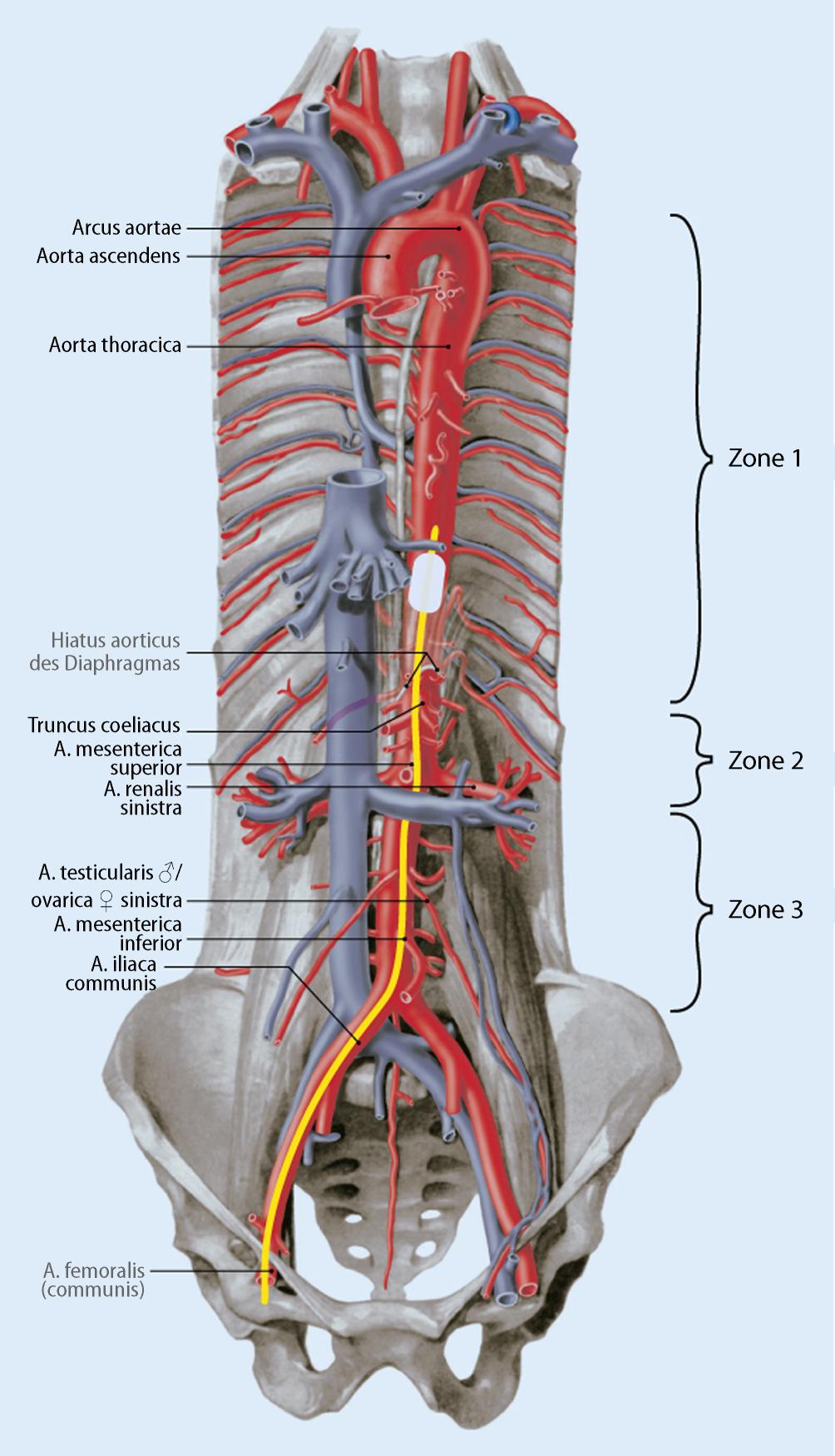 Invasive Notfalltechniken – INTECH Advanced | SpringerLink