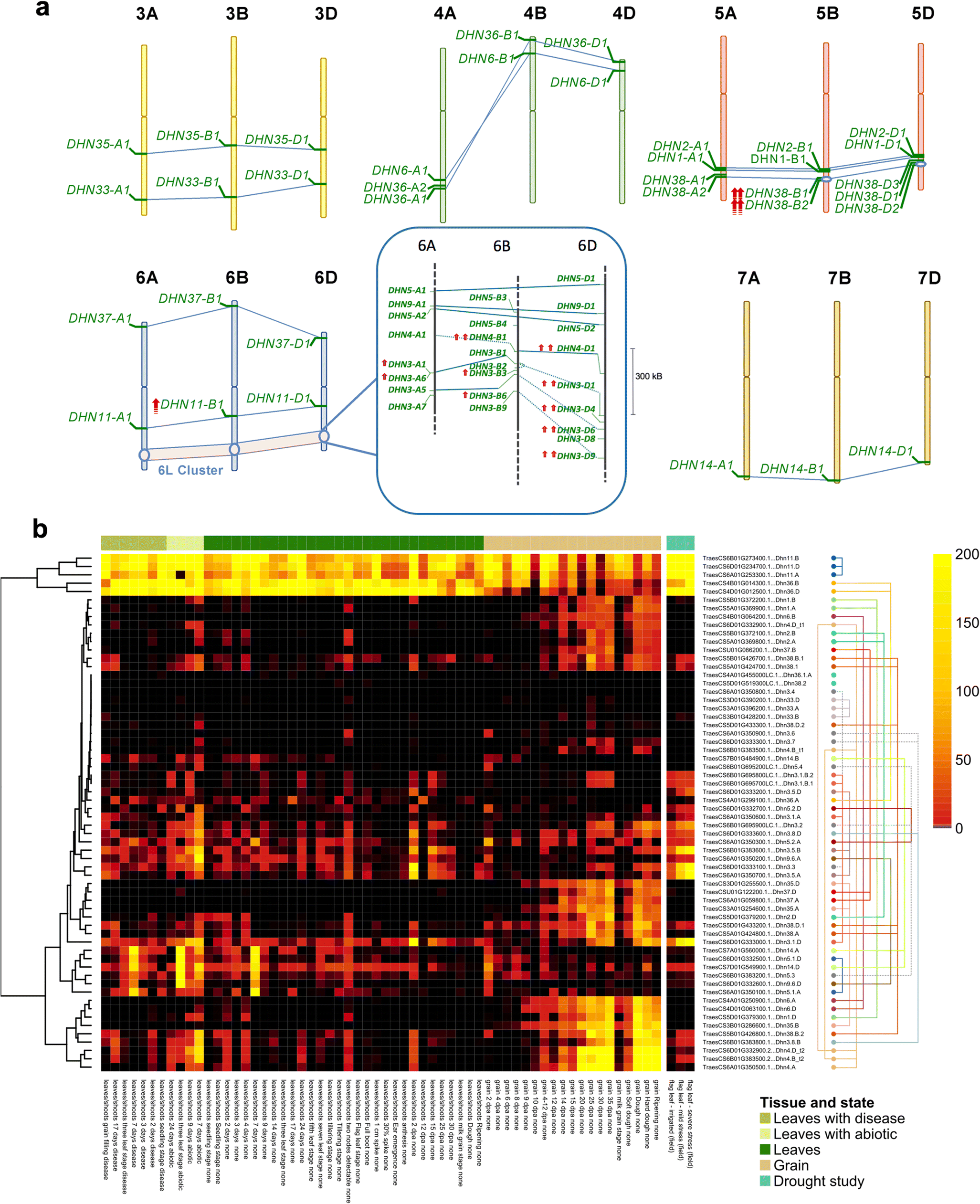 Hotspots in the genomic architecture of field drought responses in