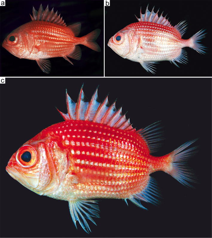 Review Of The Ostichthys Japonicus Complex Beryciformes