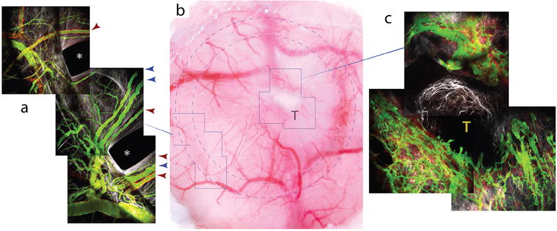 af20a90f253 Consensus guidelines for the use and interpretation of angiogenesis ...