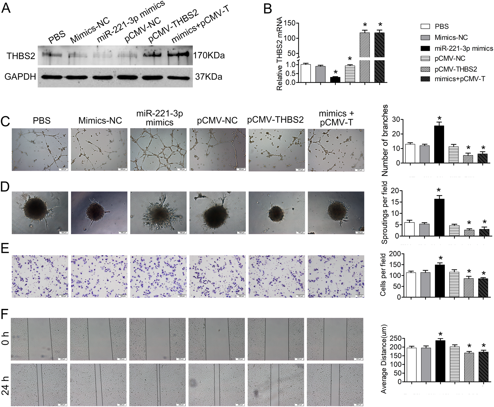 Cancer-derived exosomal miR-221-3p promotes angiogenesis by