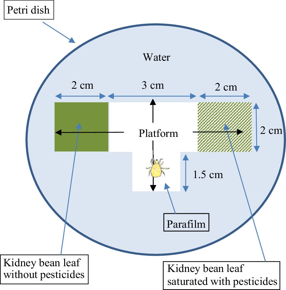 The response of three species of phytoseiid mite (Acari