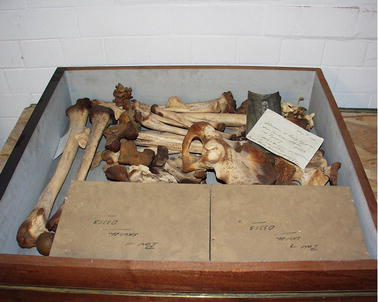 The body in the box: archiving the Egyptian mummy | SpringerLink