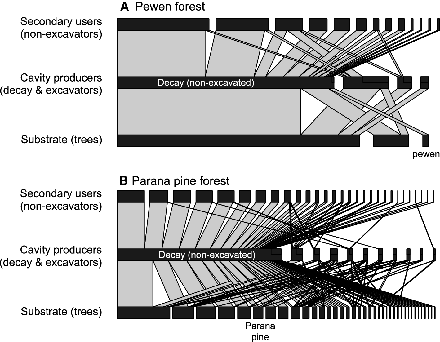 Interspecific networks of cavity-nesting vertebrates reveal a