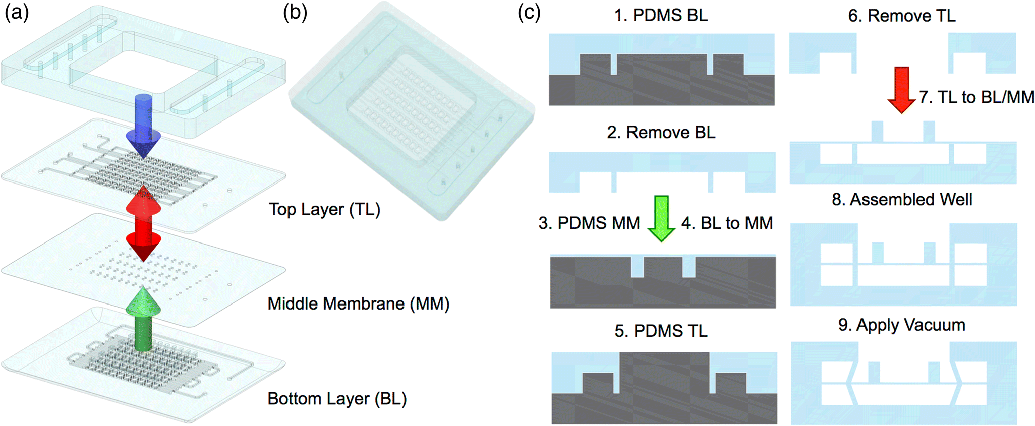 A vacuum-actuated microtissue stretcher for long-term exposure to