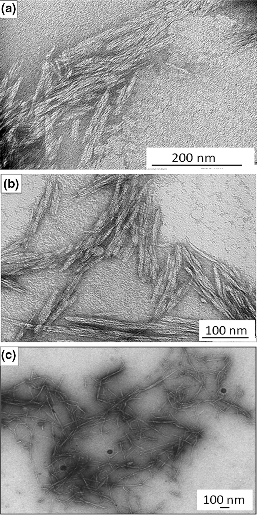 Sugarcane bagasse fiber and its cellulose nanocrystals for