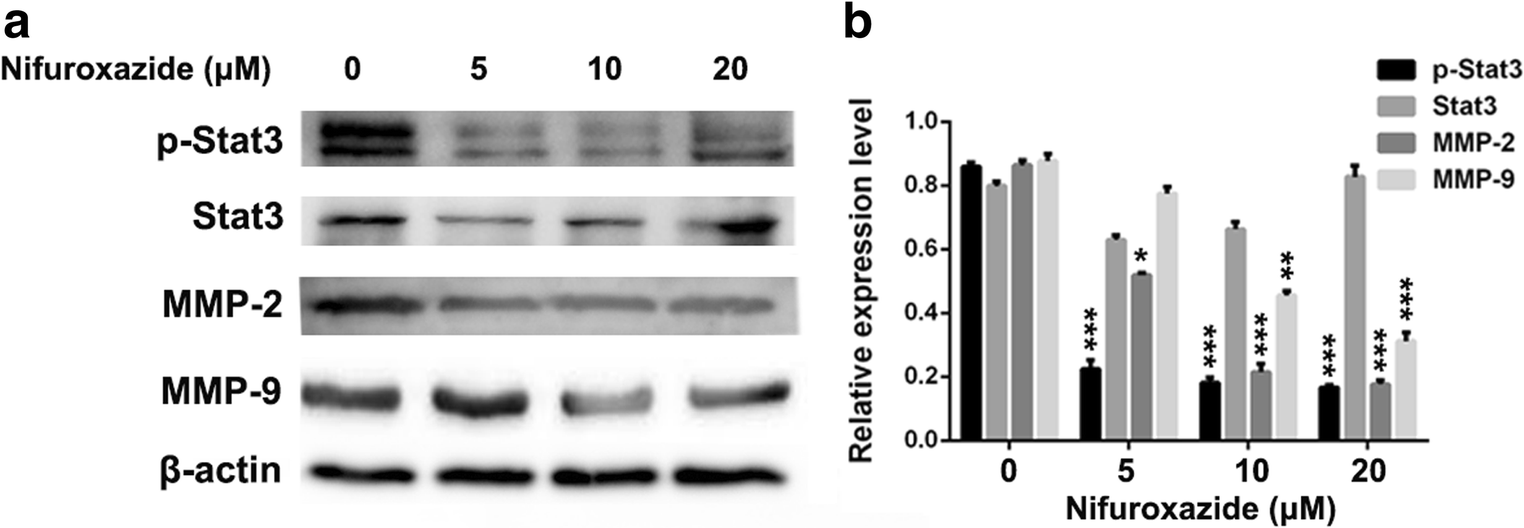 Nifuroxazide induces apoptosis, inhibits cell migration and