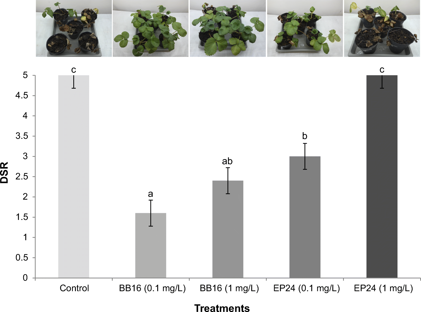 Effect Of Natural And Synthetic Brassinosteroids On Strawberry Plant Diagram Open Image In New Window