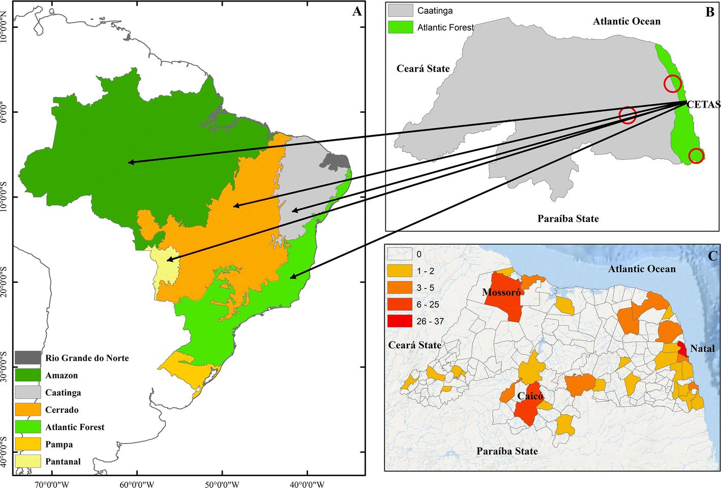 Wild animals seized in a state in Northeast Brazil: Where do