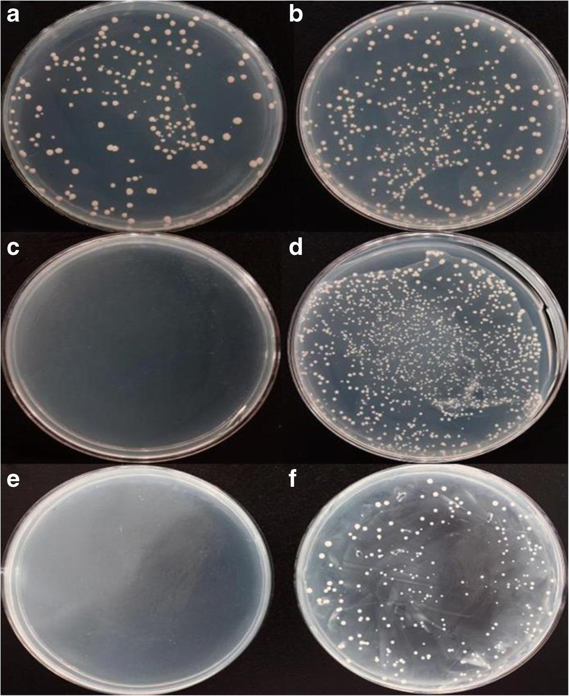 Identification of Carassius auratus gibelio liver cell proteins