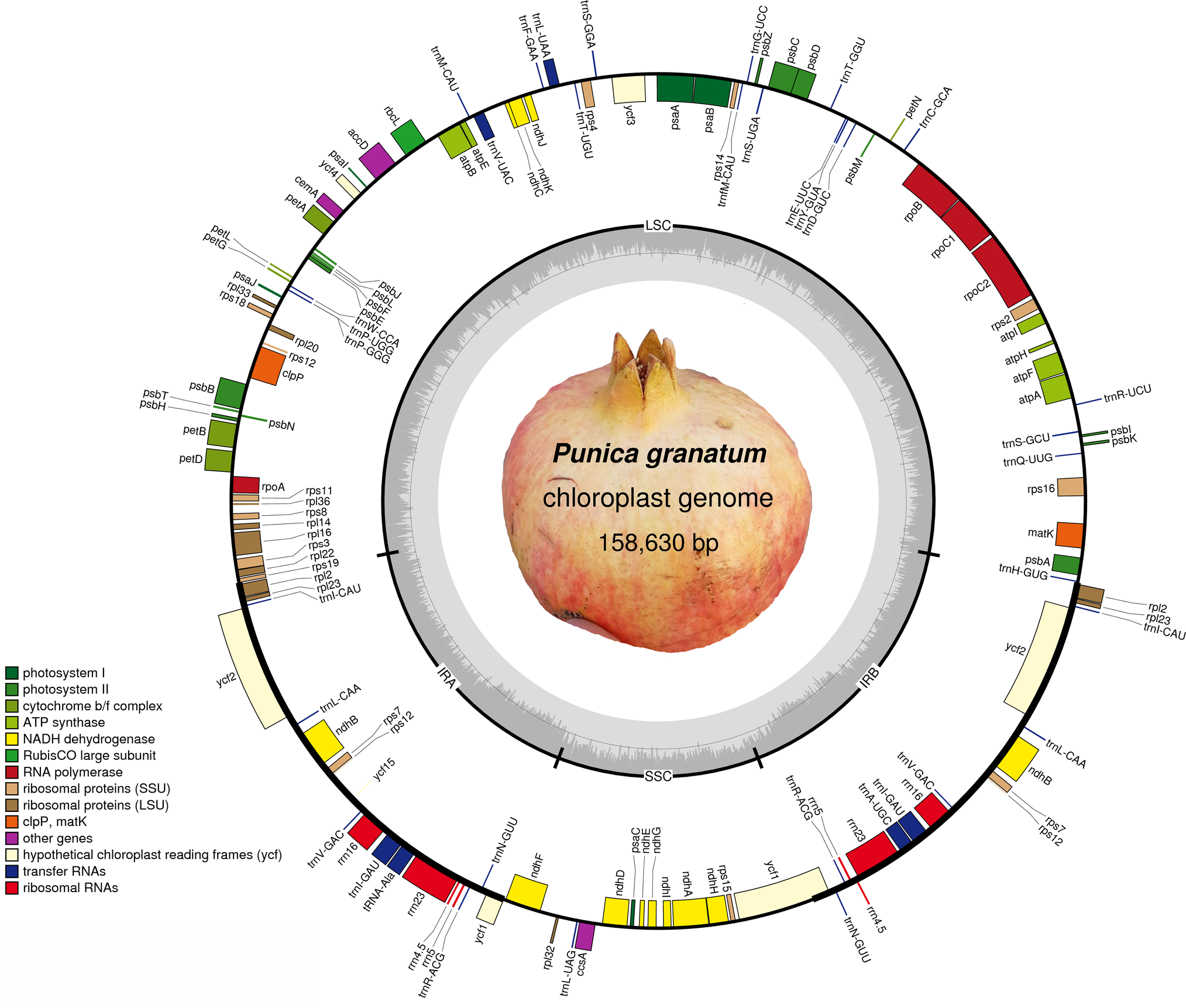 First Reported Chloroplast Genome Sequence Of Punica Granatum Figure 8 The Block Diagram Algorithm Psa 4000 Monitor Fig 1