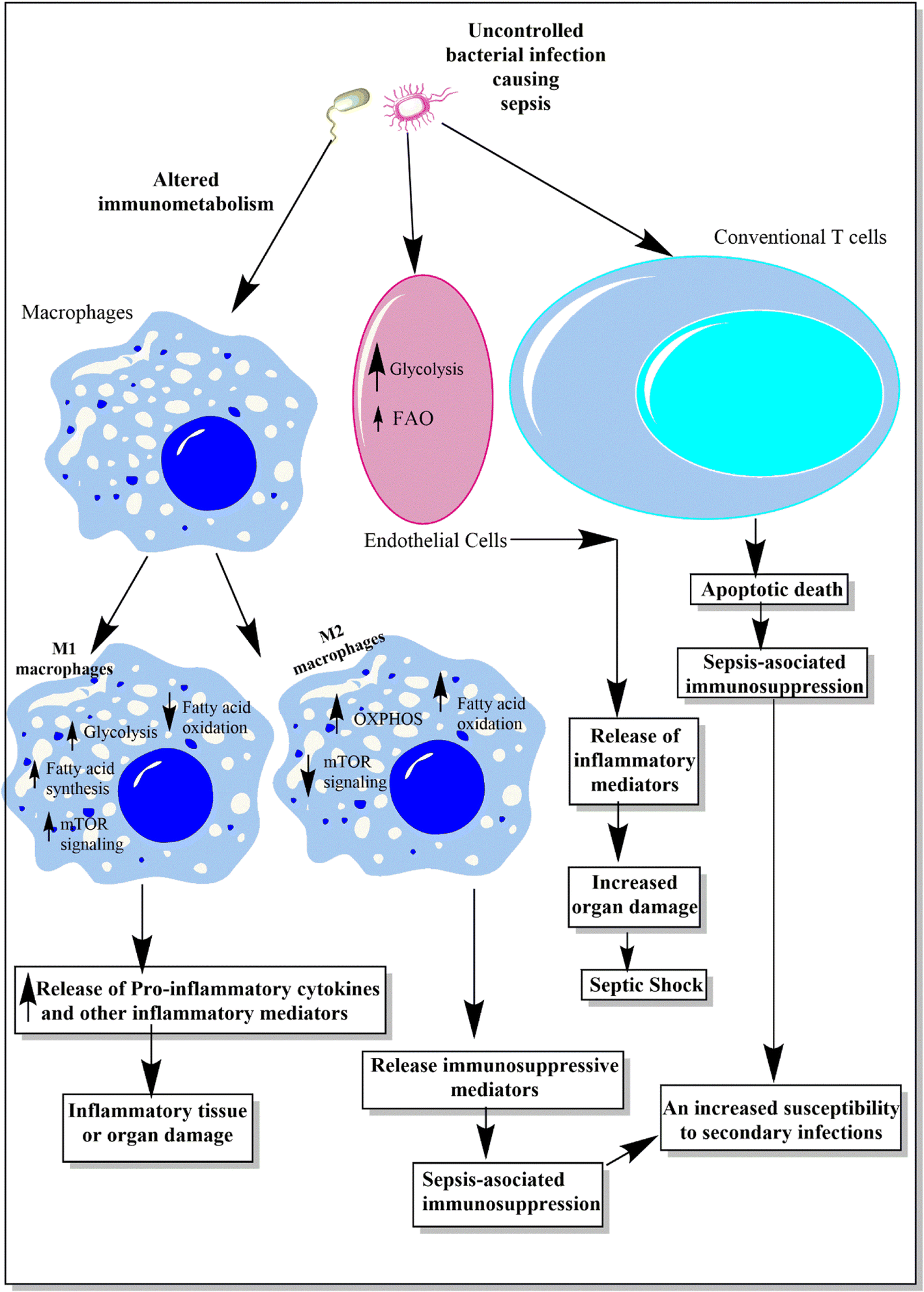 Immunometabolism: Another Road to Sepsis and Its Therapeutic