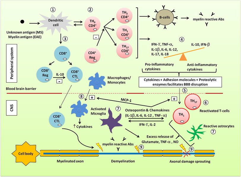 Multiple sclerosis-induced neuropathic pain: pharmacological