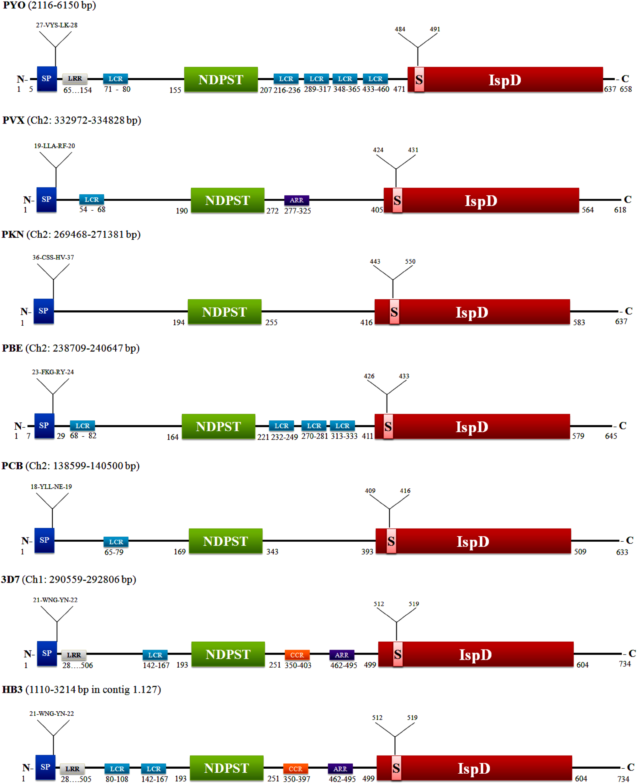Deciphering structure, function and mechanism of Plasmodium