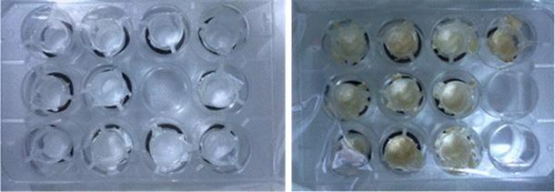Crosslinking Of Poly Vinyl Alcohol Nanofibres With