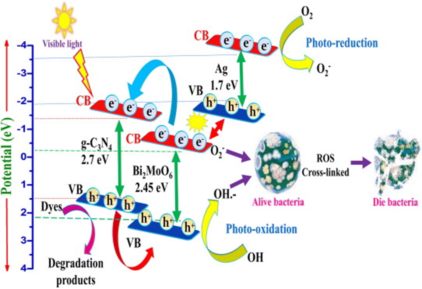 Photocatalytic disinfection efficiency of 2D structure graphitic