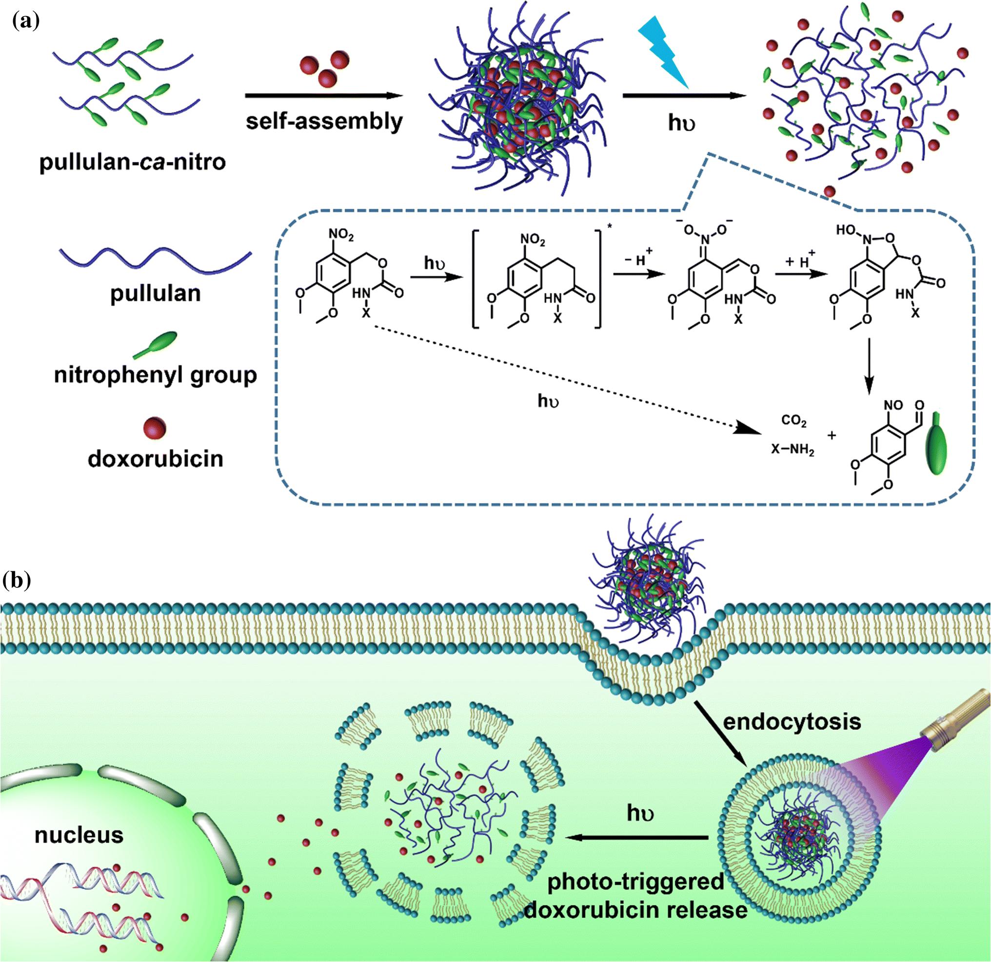 Nitrophenyl-engaged photocleavage of an amphiphilic