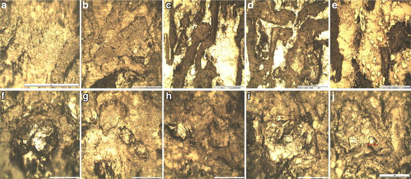 Effects of graphene content on thermal and mechanical properties of