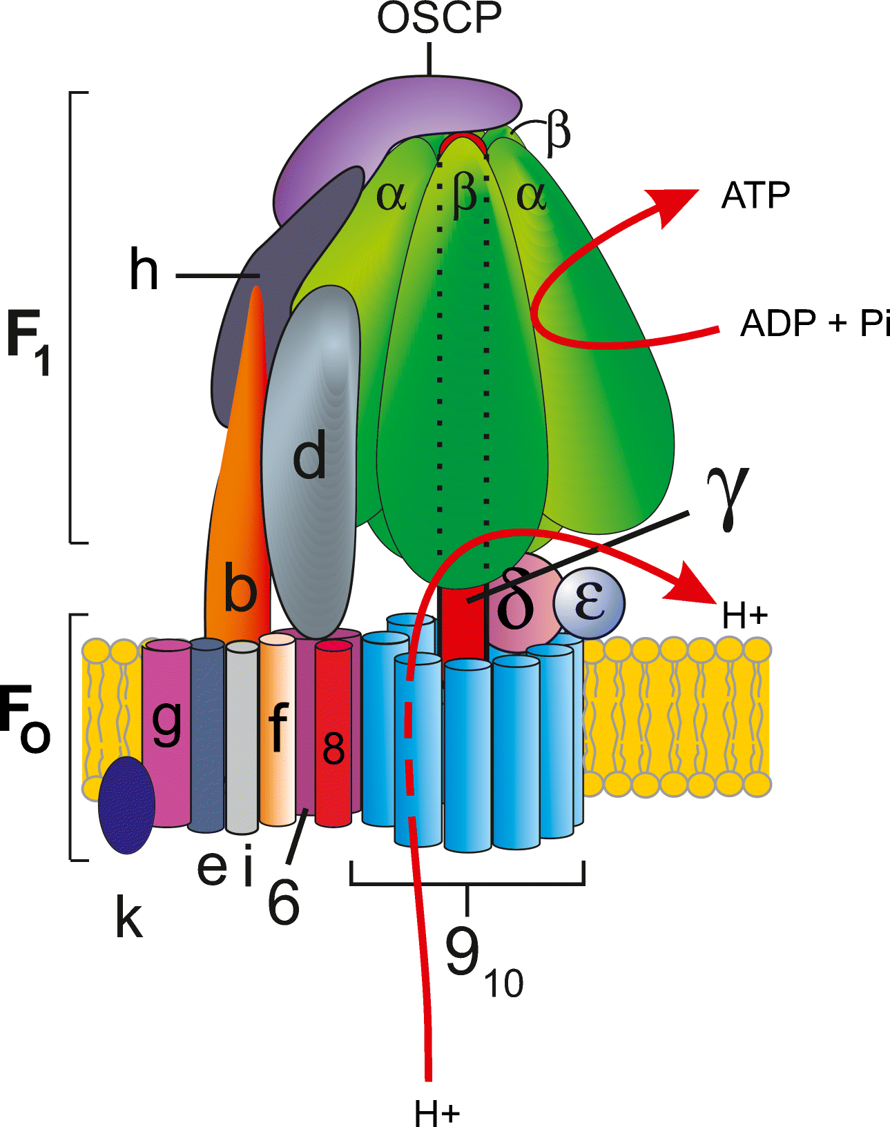 Current Understanding Of Structure Function And Biogenesis