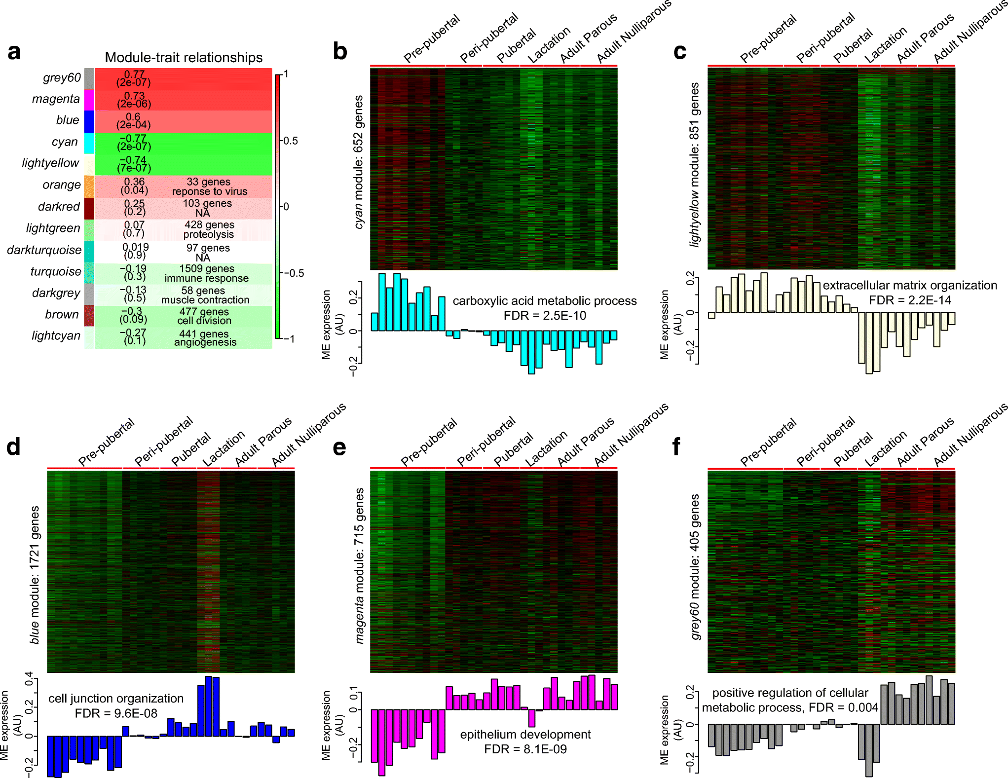 Histology and Transcriptome Profiles of the Mammary Gland across