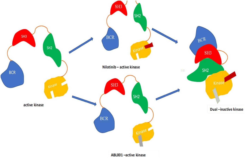 A Synergistic Combination Against Chronic Myeloid Leukemia: An Intra