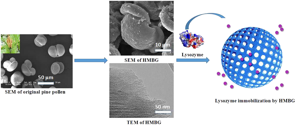 Preparation of hierarchically mesoporous bioactive glass and