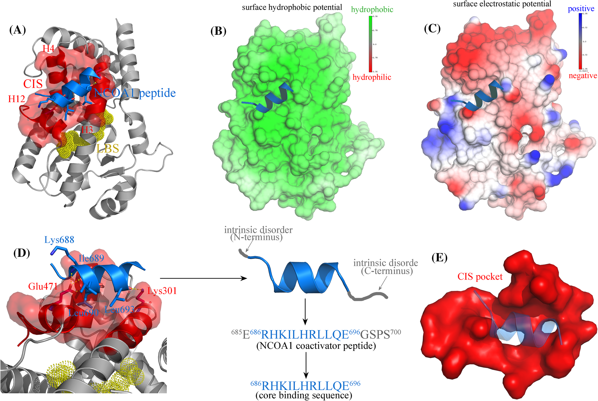 Structure-Based Stepwise Screening of PPARγ Antagonists as