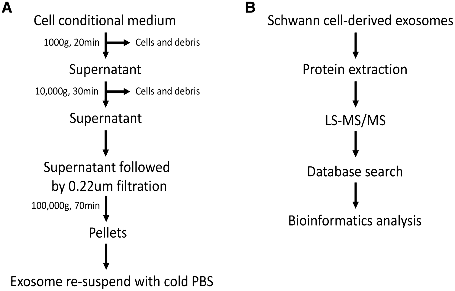 c07d82adbca1 Proteomics analysis of Schwann cell-derived exosomes  a novel ...