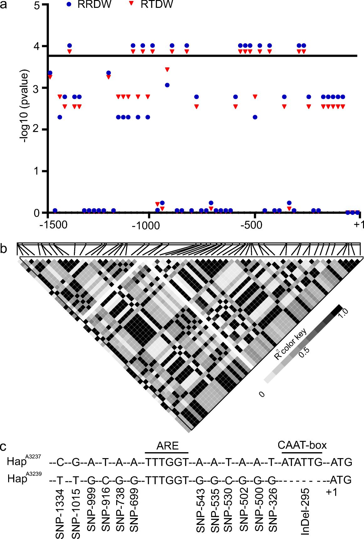 Major natural genetic variation contributes to waterlogging