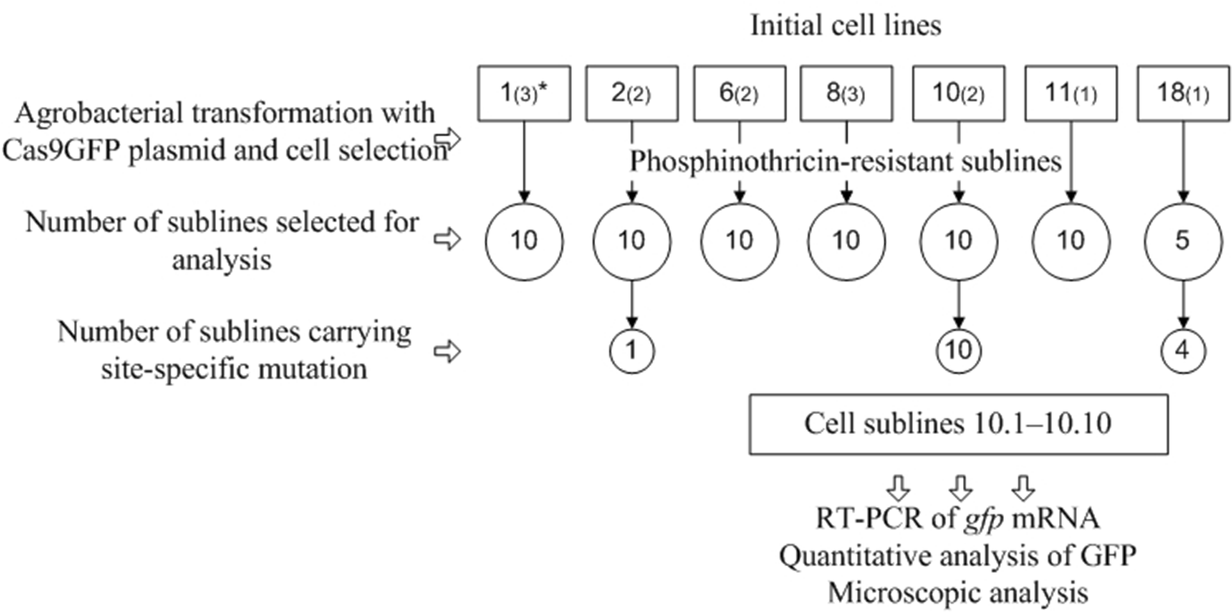 CRISPR/Cas9-mediated gfp gene inactivation in Arabidopsis suspension