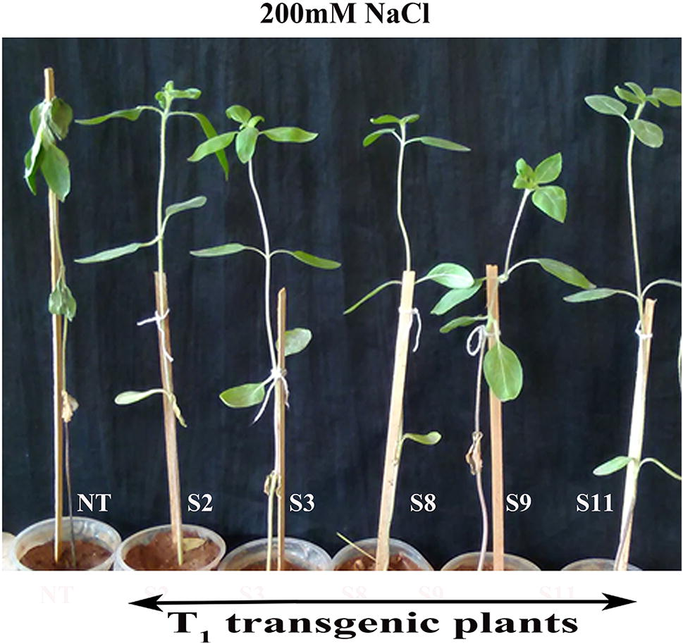 Improved salinity tolerance and growth performance in transgenic
