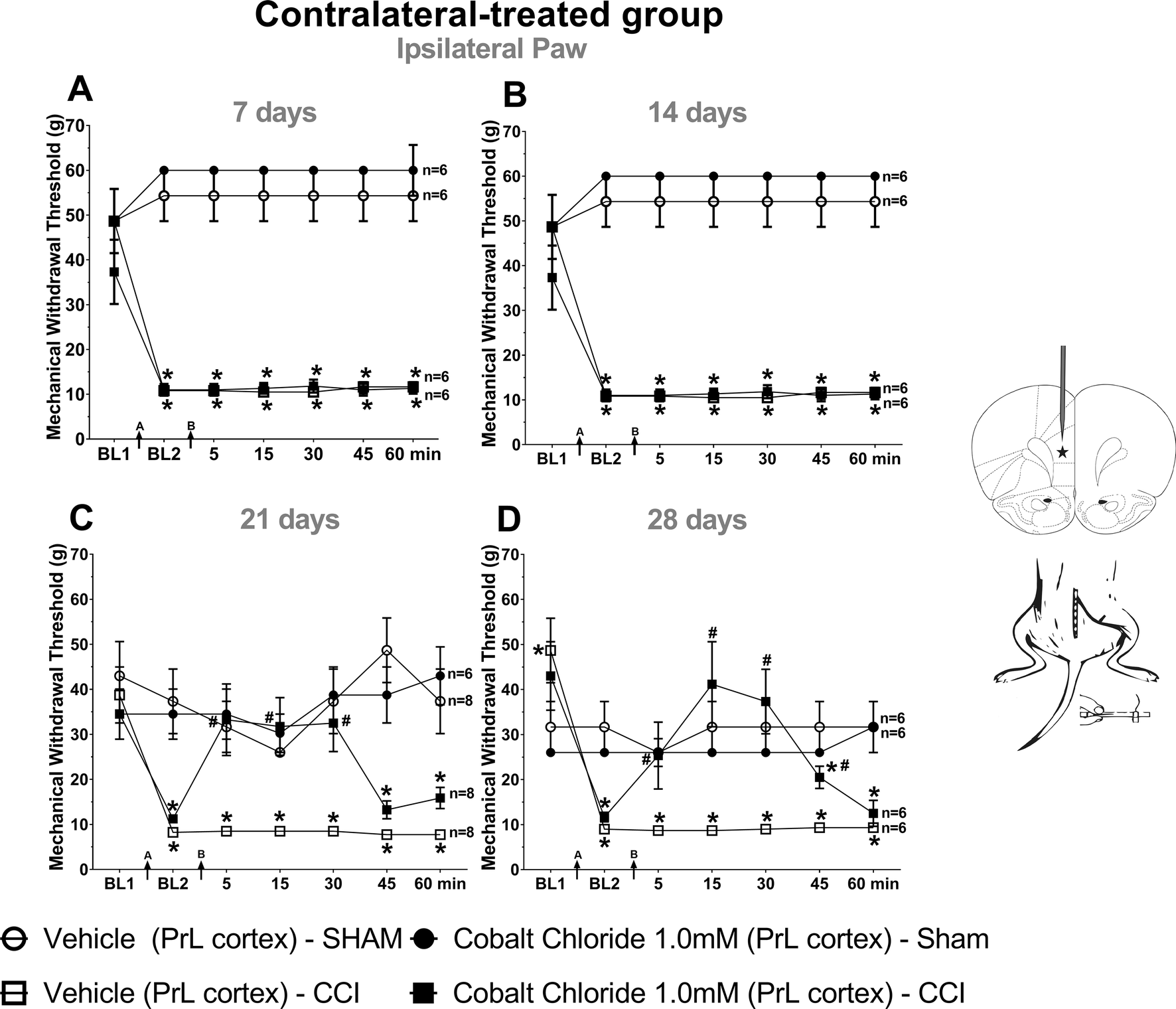 N-methyl- d-aspartate Receptors in the Prelimbic Cortex are