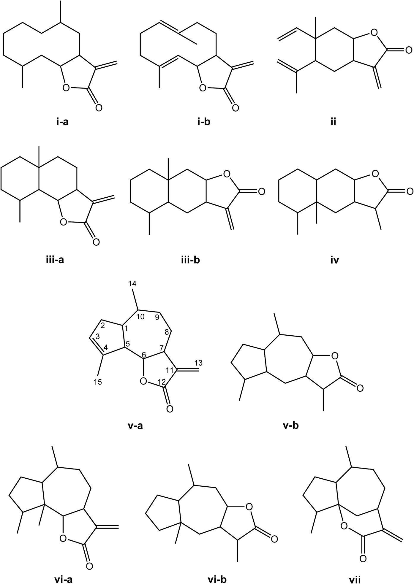 Biosynthesis and bioactivity of Cynara cardunculus L