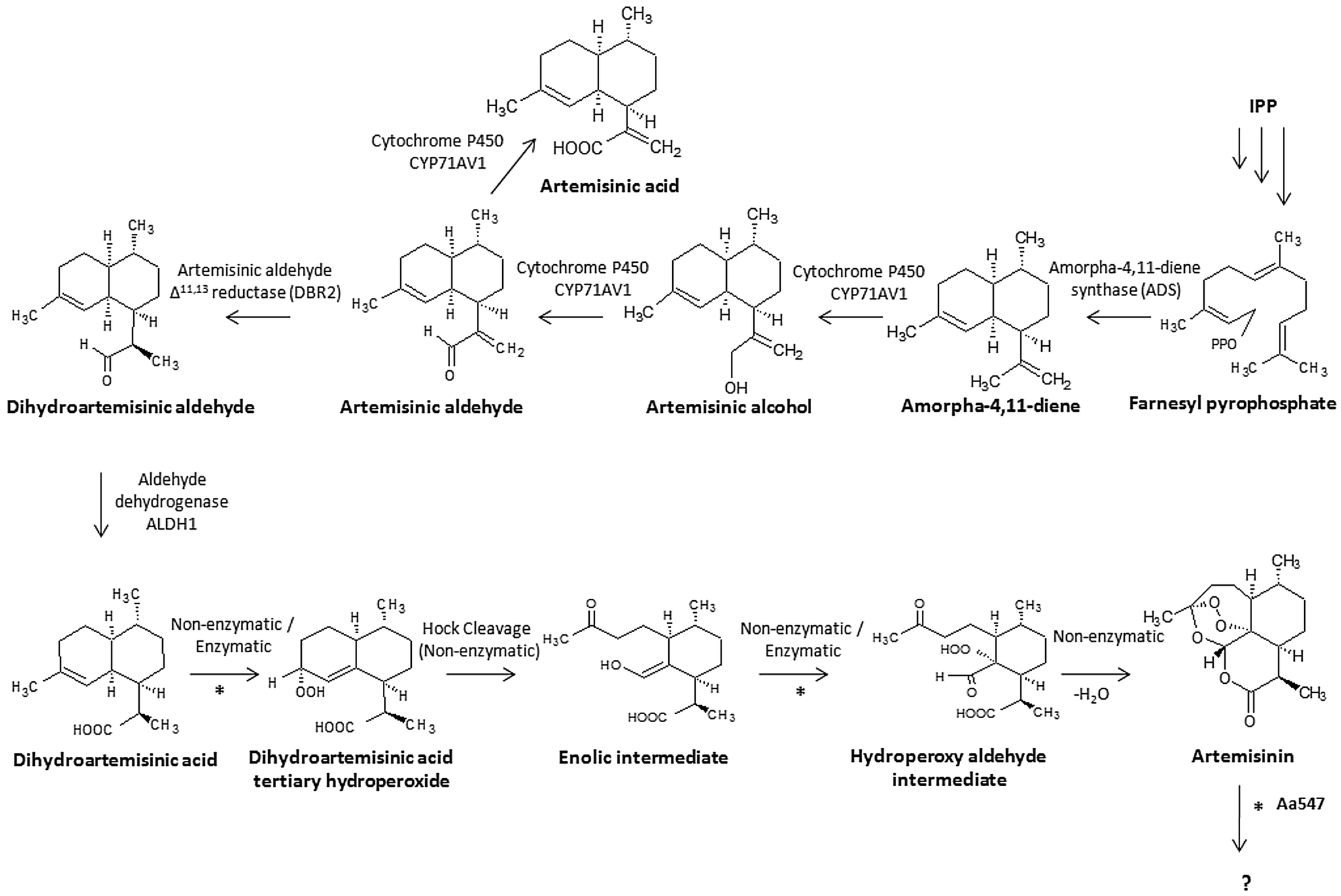 Characterization of a class III peroxidase from Artemisia