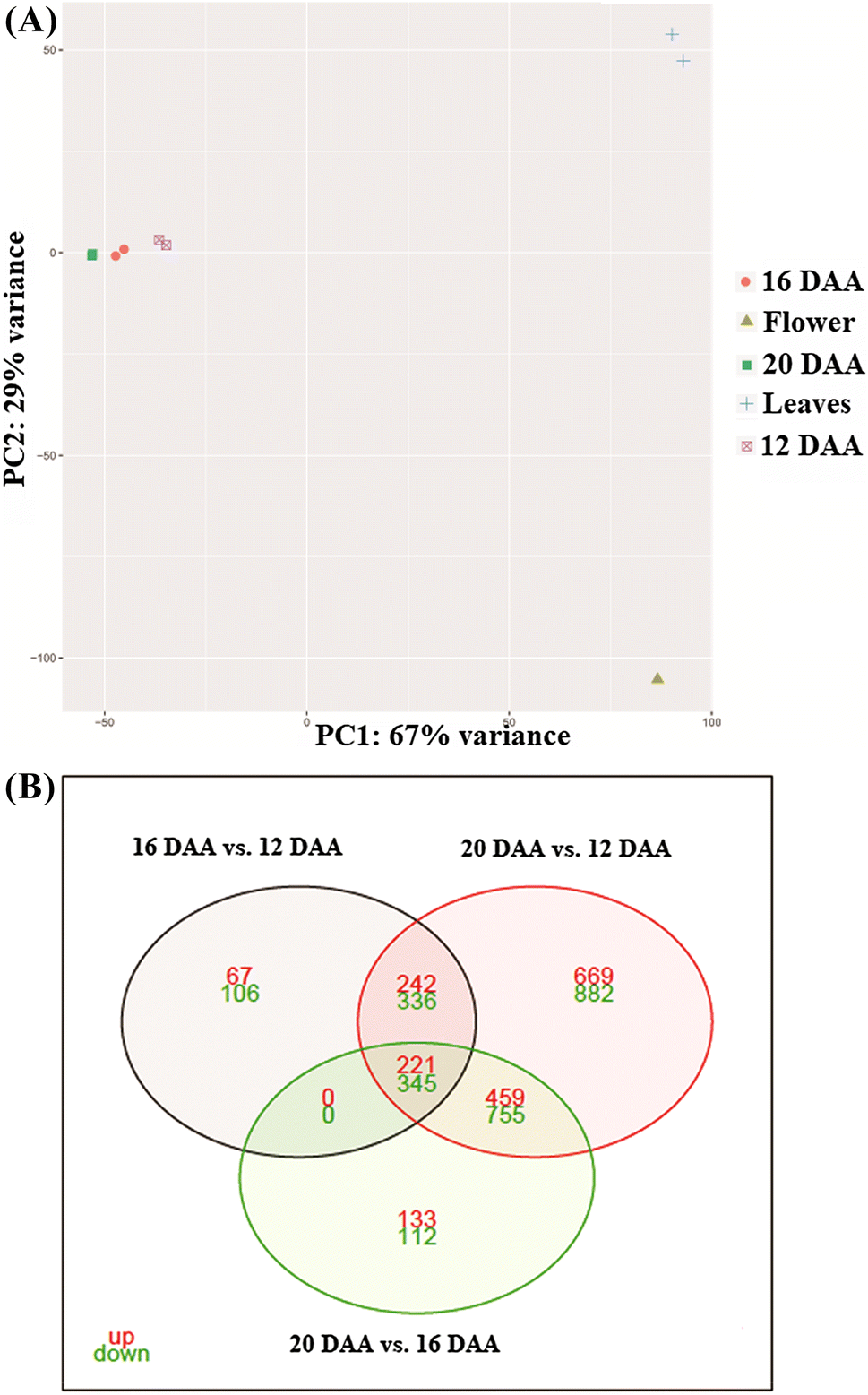 Transcriptome analysis of acerola fruit ripening: insights into