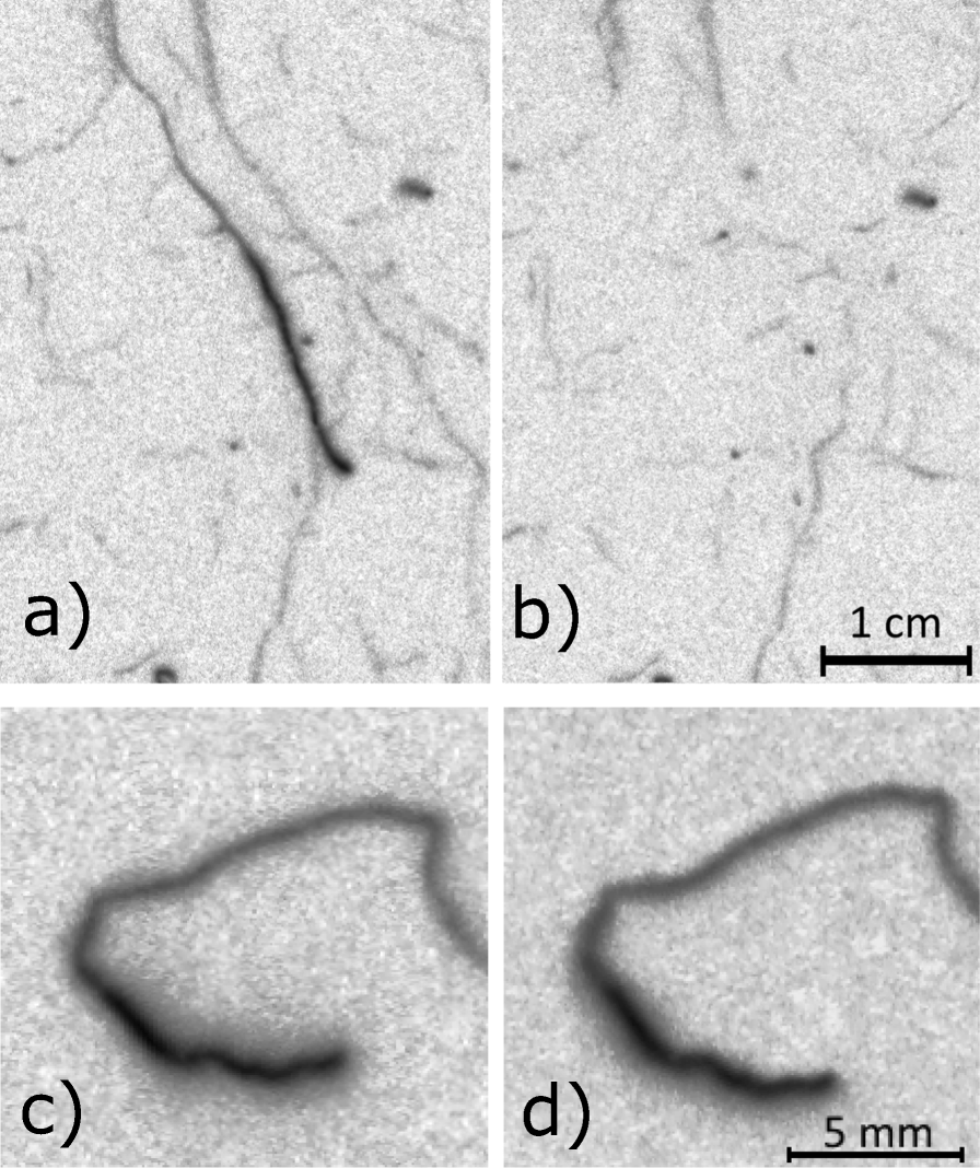Visualization and quantification of root exudation using 14C