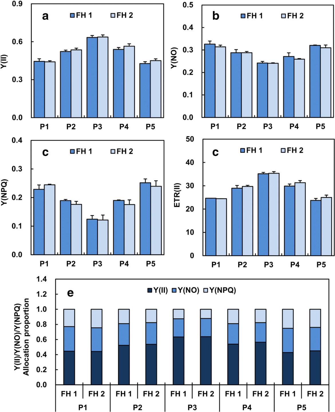 Phosphorus-fertilisation has differential effects on leaf