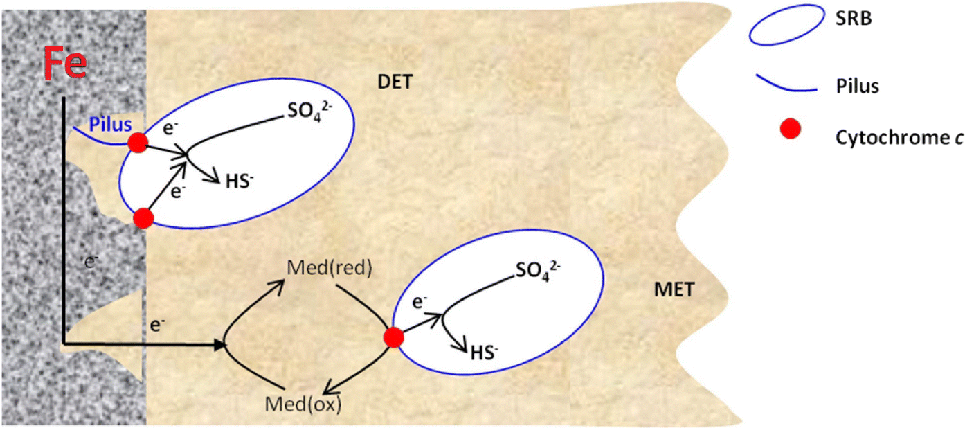 A review: microbiologically influenced corrosion and the